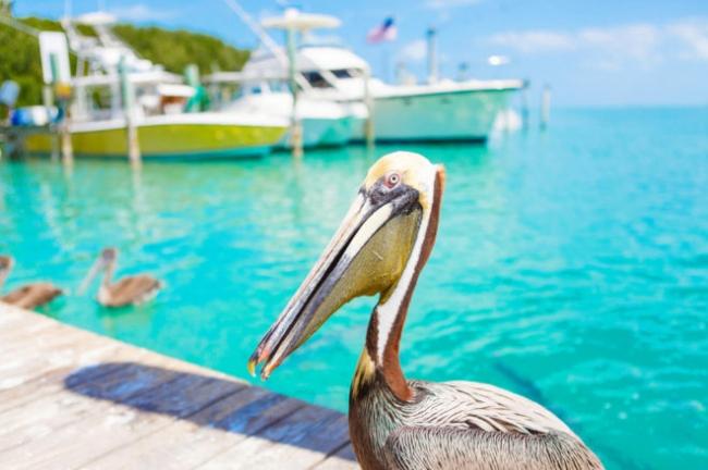 Cayos de la Florida +Miami + Nueva York!!!