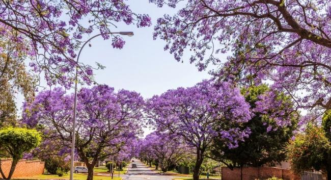 GRAN SUDAFRICA