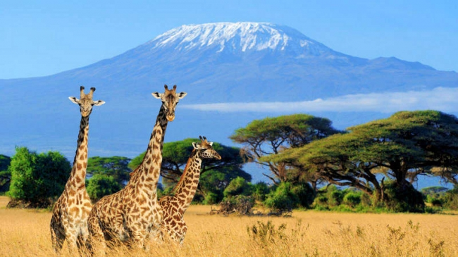 Kenia y Tanzania al completo