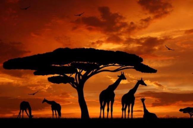 Lo mejor de Kenia