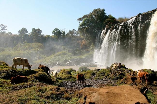 Etiopia Exotica